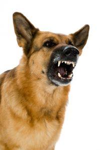 dog_aggressive_4464403.jpg